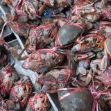 Świezi kraby Fotografia Stock