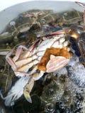 Świezi kraby w basenie Zdjęcie Stock