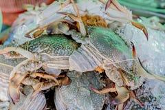 Świezi kraby w rynku, Thailand Zdjęcie Royalty Free