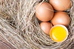 świezi kurczaków jajka Fotografia Royalty Free