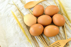 Świezi kurczaków jajka 2 Obraz Stock