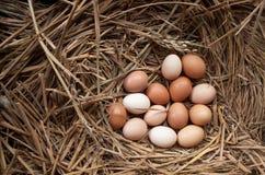Świezi kurczaków jajka z gniazdeczkiem, A brown jajka w gniazdeczku stos Obraz Stock