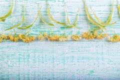 Świezi lipowi kwiaty na drewnianej desce Obraz Royalty Free