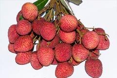 ?wiezi lychees Wiązka czerwoni dojrzali lychees na białym tle obraz royalty free