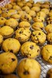 świezi muffins Obraz Royalty Free