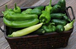 Świezi Ogrodowi warzywa od ogródu Zdjęcie Stock