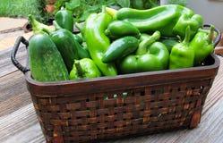 Świezi Ogrodowi warzywa od ogródu Obraz Stock