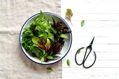 Świezi ogrodowi ziele w rocznika talerzu Zdjęcie Royalty Free