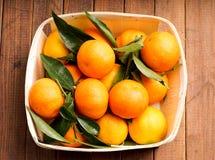 Świezi organicznie Clementines Zdjęcie Stock