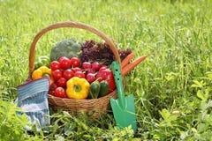 świezi organicznie plenerowi warzywa Obraz Stock