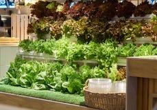 Świezi organicznie warzywa dla bubla obrazy royalty free