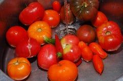 Świezi pomidory obraz royalty free