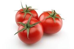 Świezi pomidory Zdjęcie Stock