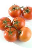 świezi pomidory Obraz Stock