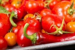 Świezi pomidory i inni warzywa na szkotowej niecce Fotografia Stock