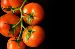 Świezi pomidory na trzonie Zdjęcia Stock