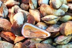 Świezi shellfish w rynku Obraz Stock