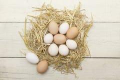 Świezi surowi jajka w karmazynki gniazdeczku fotografia royalty free