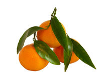 świezi tangerines Obraz Stock