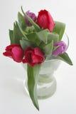 świezi tulipany Obrazy Royalty Free