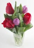 świezi tulipany Obrazy Stock