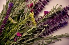 Świezi wildflowers Romantyczny ziele Obraz Stock