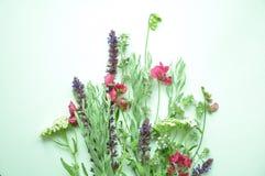 Świezi wildflowers Romantyczny ziele Zdjęcie Stock