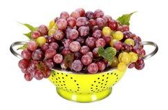 Świezi winogrona Obrazy Royalty Free