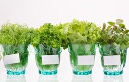 świezi ziele Zdjęcia Stock