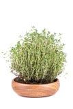 Świezi ziele Fotografia Stock