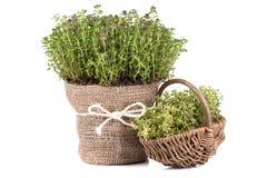 Świezi ziele Fotografia Royalty Free