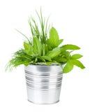 Świezi ziele w metalu wiadrze Zdjęcie Stock