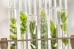 Świezi ziele w próbnej tubce Obraz Royalty Free