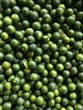 świezi zieleni wapno Fotografia Stock