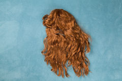Wig on carpet. A wig thrown on the floor, on a turquoise carpet Stock Images