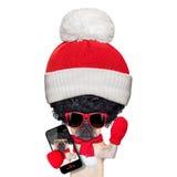 Wig selfie dog royalty free stock photos