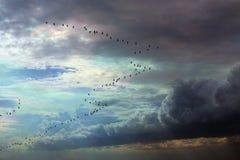 Wig van vogels bij zonsondergang Stock Afbeeldingen