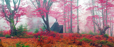 Wigwam in the autumn forest Stock Image