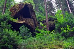 Wiild nature of National Park Czech Switzerland. Forest in National Park Czech Switzerland, Czech republic, Europe stock photo