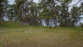 Wiildlife en el bosque fotografía de archivo