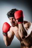 Wiith muscular del boxeador Fotografía de archivo