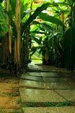 Wijąca ścieżka prowadzi ustronny punkt Fotografia Royalty Free