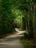 Wijąca ścieżka przez drewien zdjęcie stock