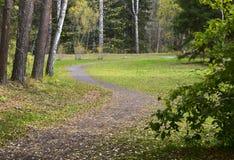 Wijąca ścieżka w jesień parku zdjęcia stock