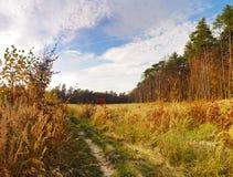 Wijący footpath w sosnowym lesie zakrywającym w zielonej trawie Obrazy Stock