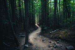 Wijący lasowy ślad Zdjęcia Royalty Free