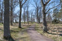 Wijący przejście przy wiosną Zdjęcie Royalty Free