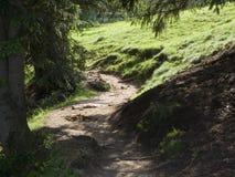 Wijący sposób łąka Zdjęcie Royalty Free