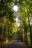 Wijącej drogi las Zdjęcia Stock
