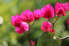 Wij compileerden Rode bloemen Royalty-vrije Stock Fotografie